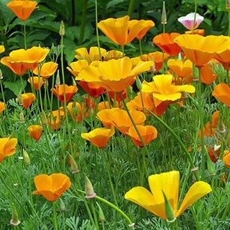Желтые цветы в саду (Блог о растениях ...